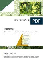 Seminario-Fitoextracción