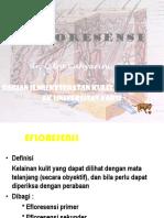 76238373-EFLORESENSI