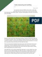 Batikdlidir.com-Batik Fabric Green Looks Reassuring and Soothing