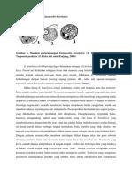 Morfologi Dan Fisiologi Entamoeba Histolytica
