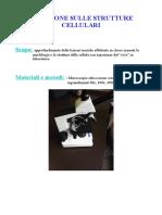 Relazione microscopio definitiva