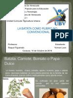 Exposición Batata. Yorman Leon. Agricultura Urbana (1)
