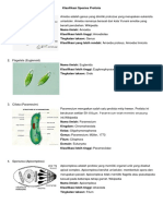 Klasifikasi Species Protista