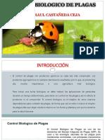 controlbiologicodeplagasyenfermedades-160209010922 (1)