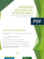Universidad Intercultural Del Estado de Mexico