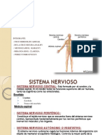 Sistema-nervioso i y II Diapos