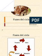Fases del ciclo estral.pptx