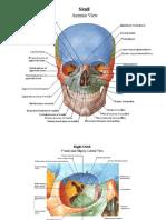 Atlas of Human Anatomy - Netter - 2006