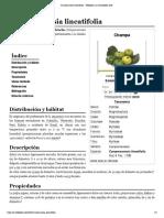 Campomanesia Lineatifolia - Wikipedia, La Enciclopedia Libre