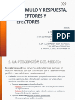 Estimulo y Respuesta_receptores y Efectores