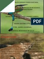 Animales en peligro de extincion (4).pptx