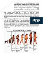Evolcuion Del Hombre