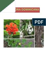 La Flora Dominicana