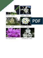 Flores Nacionales de Centroamerica