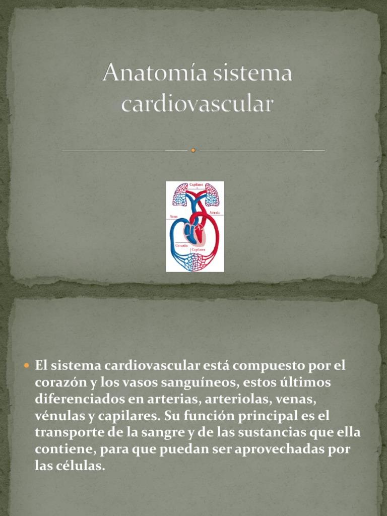 Anatomía Sistema Cardiovascular