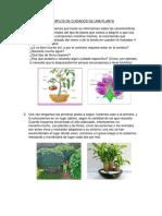 Ejemplos de Cuidados de Una Planta