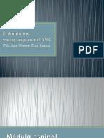 3. Anatomía SNC