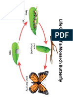 butterfly life cycle print out