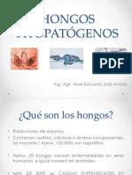 Clasificaciondehongos 150326213816 Conversion Gate01