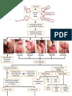 WOC hypospadia (1)