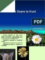 Lectie 11 de La Floare La Fruct
