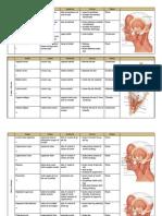 Muscle Chart