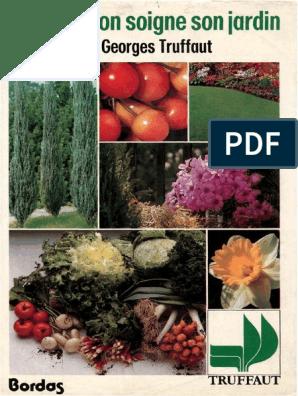 """Picea orientalis /""""gracilis/"""" satin variété l/'Orient-épicéa"""