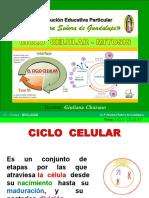 ciclocelular-mitosis-5-130826205734-phpapp02.pdf