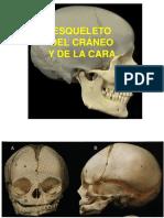 1. Cabeza Osea