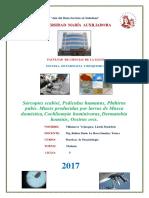 Informe Parasitologia