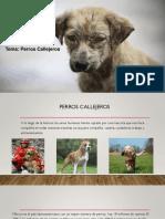 Perros Callejeros Expo