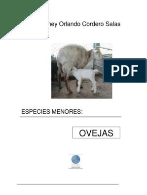 Clinica integral cordero alajuela