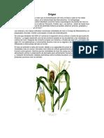 Origen Del Maiz y Significado de Los Cuatro Colores