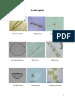 fitoplankton za studente