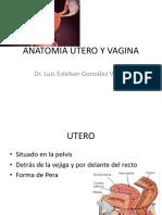 Anatomia Utero y Vagina
