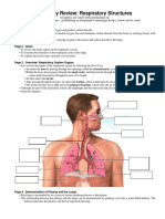Anatomy Review Respiratory
