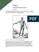 AnatomiaUmana.it.Wikipedia.org