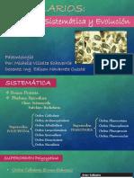 Radiolarios - Sistematica y Evolución