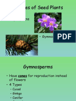 angiospermsandgymnosperms-130808102617-phpapp01