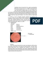 Laporan Resmi Praktikum Parasit Dan Penyakit Ikan Kelompok 20