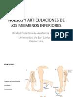 Huesos y Articulaciones de Los Miembros Inferiores (2)