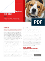 AO_Dental Prophylaxis in a Dog