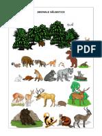 animales salbatice fisa.doc