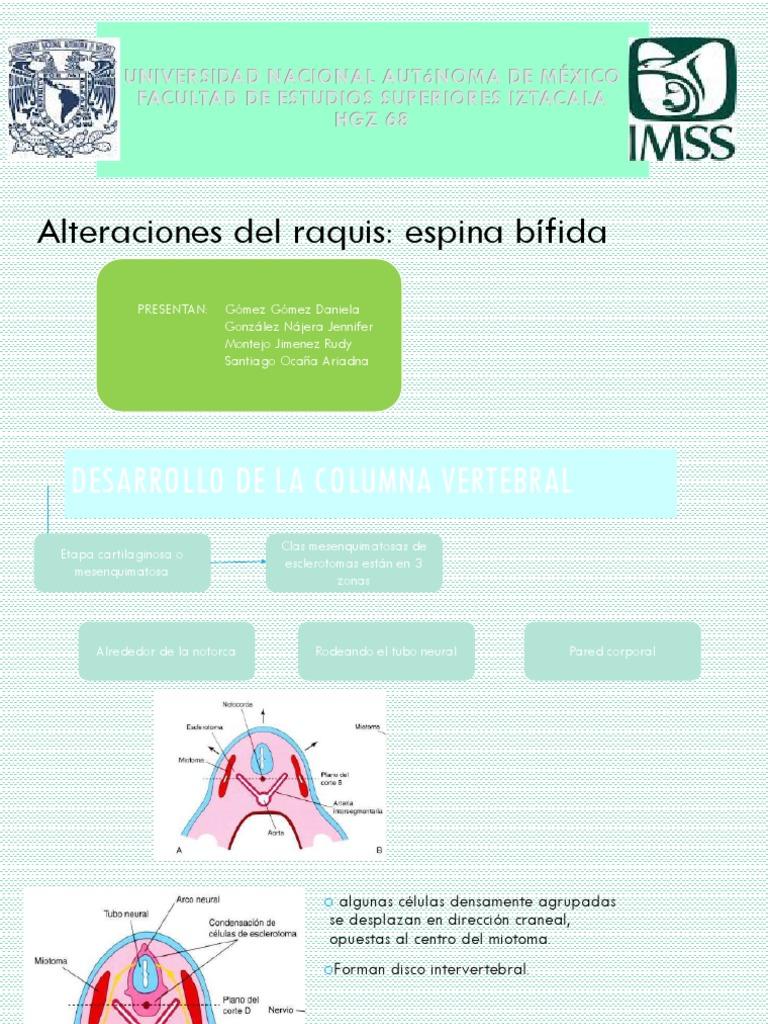 6. Espina Bifida