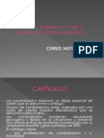 3 Tejido Cartilaginoso Adiposo