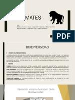 Taller Biodiversidad - Primates