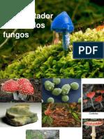 AULA 11- Filo Microsporidia, Quitridios e Zigomicetos.ppt (1)