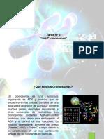 Tarea3 Genetica Mayelasanz 130915151605 Phpapp01