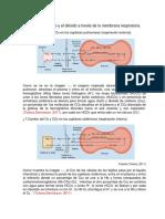 Difusión Del Oxigeno y El Dióxido a Través de La Membrana Respiratoria