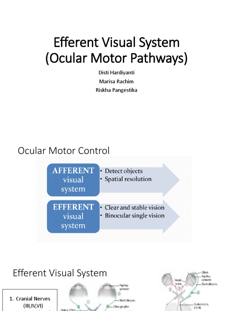 Efferent Visual System Ocular Motor Pathways Visual System